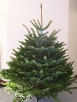 Normandy Fir Christmas Tree